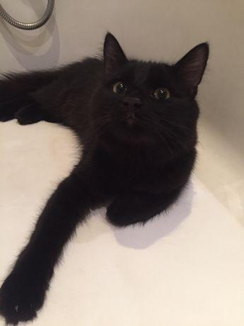 Чёрный кот в хорошие руки в добрые руки, ищет семью