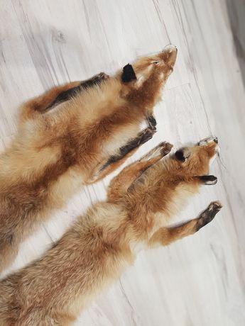 Wyprawione  skóry z lisa.