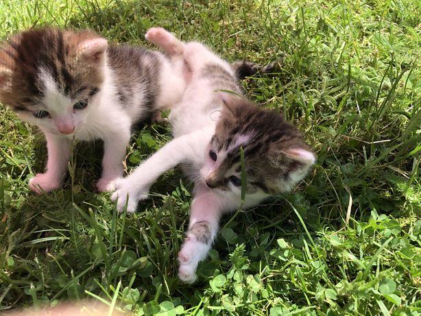 Wydam małe kotki