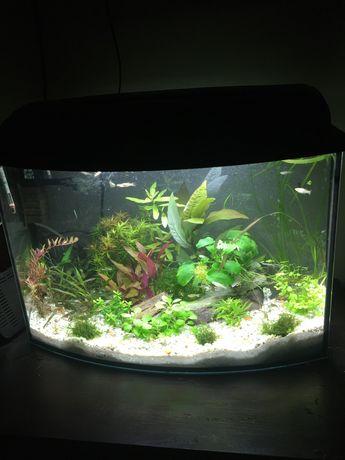 Zamienie akwarium 72 litry na wieksze