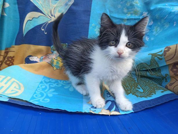 Отдам котёнка-мальчика Тимку