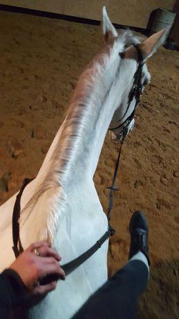 Kuc grupa D, Mały koń, zdrowy, obyty ze skokami