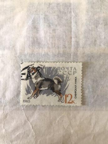 Почтовая марка «служебные и охотничьи собаки» 1965г