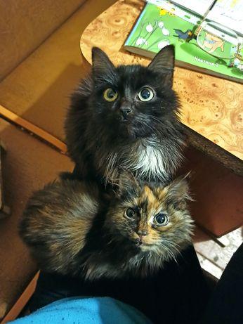 Котейки-Наполеончики в заботливые руки