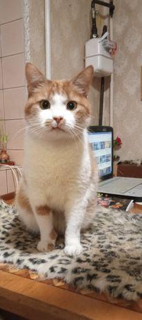Отдам рыже-белую кошку ,стерилизована , 1,5 года