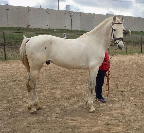 Продам жеребца коня лошадь
