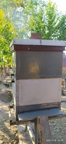 Rodziny pszczele w ulach ostrowskiej, pszczoły