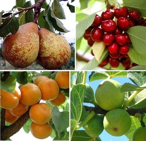 Arvores de fruto com 2 anos a dar fruto