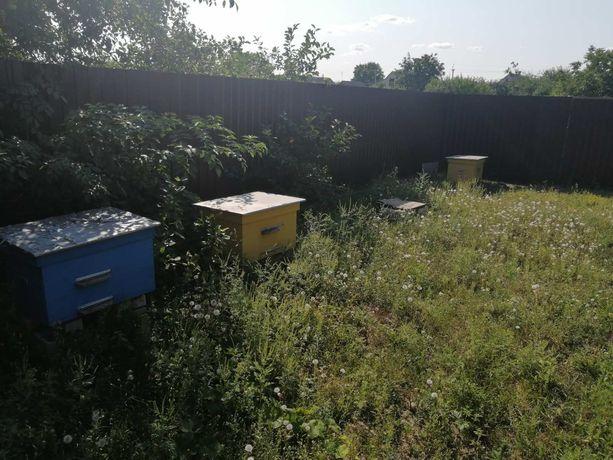 Улики для пчёл. Самовывоз