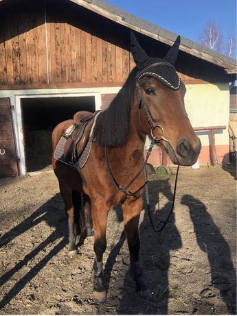 Wspoldzierzawa  konia