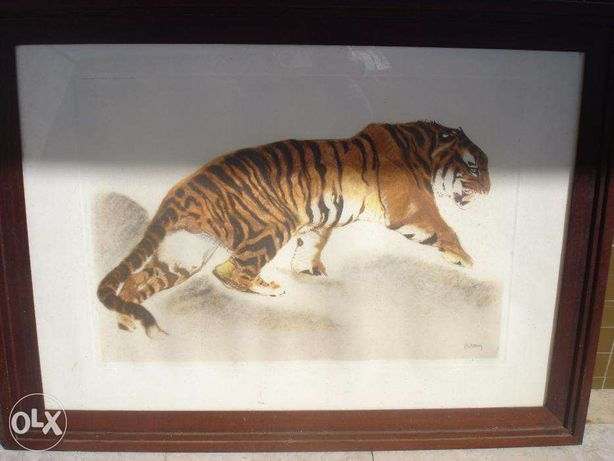 Reprodução emoldurada - Tigre