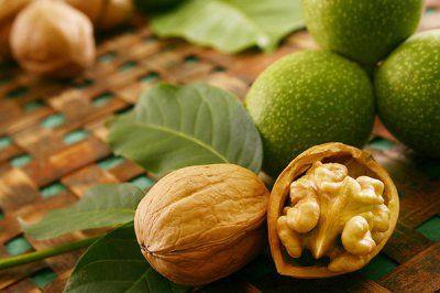 Саженцы грецкого ореха Саджанці грецького горіха