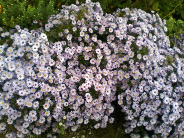 Отдам цветы бесплатно