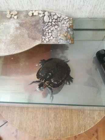 Черепашка Фрося ищет новый дом Черепаха СРОЧНО