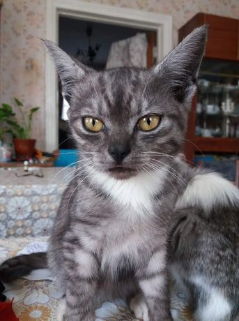 Котик в добрые руки!