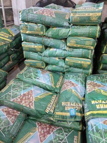 Семена кукурузы Хотын, Хортица, Пивиха и других гибридов