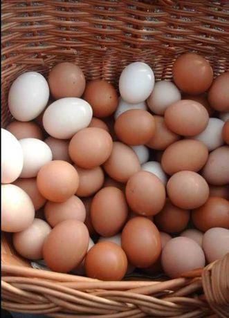 Jaja wiejskie od kur z wolnego wybiegu