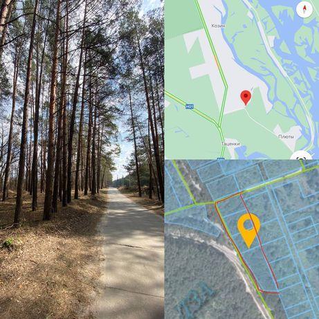 Без%, земля Козин 1.04ГА, Конча-Заспа, Украинка, Плюты, лес