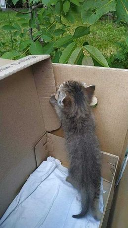 Лагідна кішечка шукає домівку