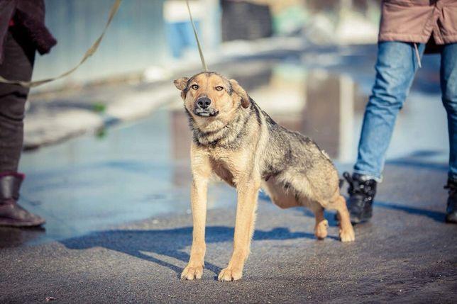 Бесплатно : молодая собака Лейла ,1 год , стерилизована