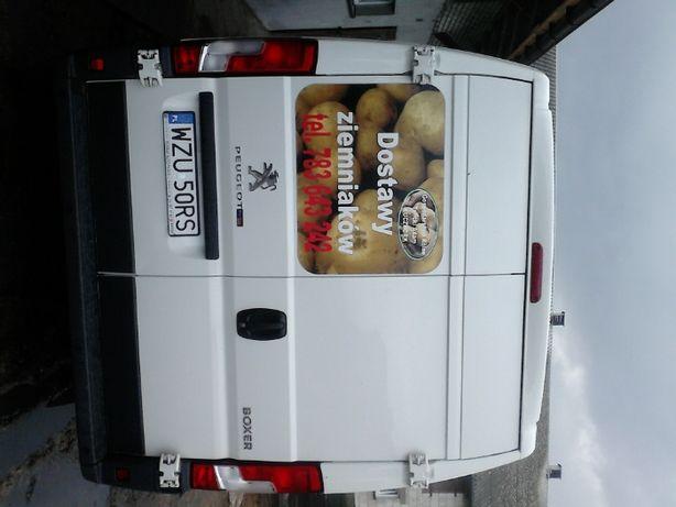 Dostawy marchwi, buraków, cebuli, pietruszki, ziemniaków. Marchew nie