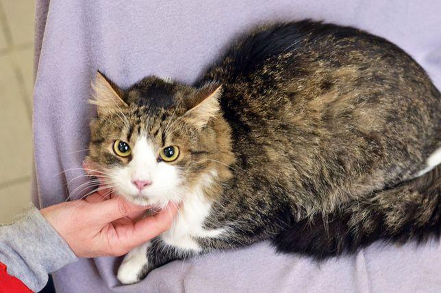 Шикарный котик Оскар! 10 месяцев (кот, кошка)