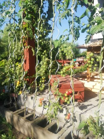 Tyczka spiralna podpora paliki do pomidorów lub innych roślin