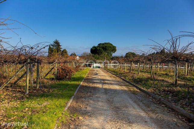 Quinta Kiwis, 3,3 ha, 3 casas, piscina, Estrada Real, Águeda, Aveiro