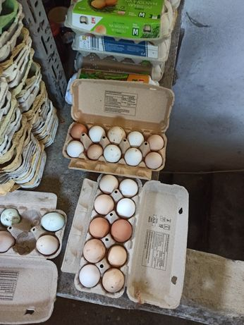 Kurze jaja, jajka, sto procent ekologiczne