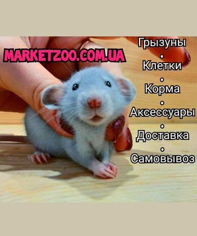 Крыски дамбо,крысы,крысята дамбо+клетки