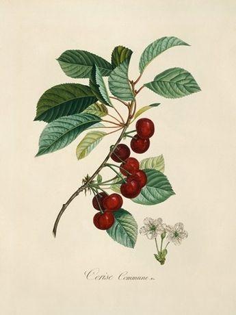 1846 r. OWOCE 4 piękne XIX w. reprodukcje do wystroju mieszkania