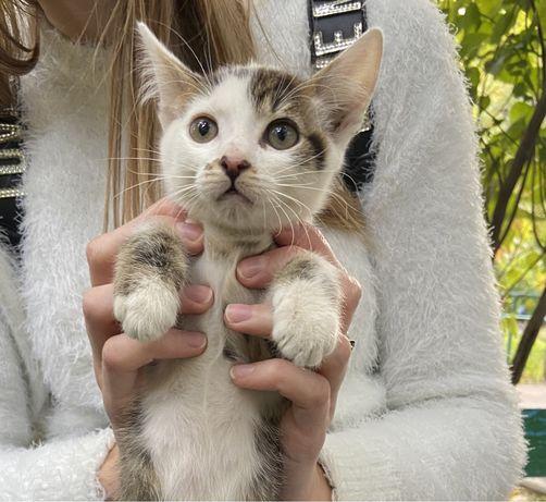 Красивый котенок в добрые руки!