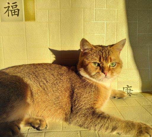 Очень нежный котик ждёт достойную даму