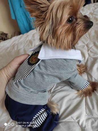 ubranko dla psa york