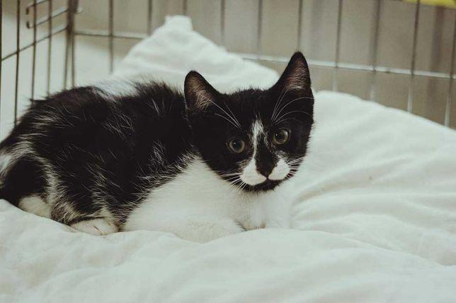 Śliczne, kochane koteczki do adopcji