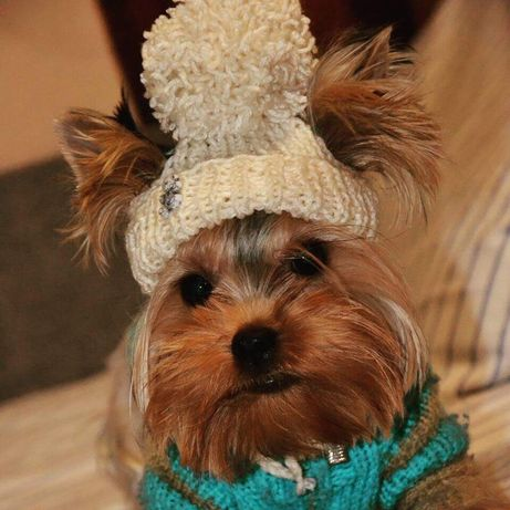 Шапка для собаки, вязаная одежда для собак