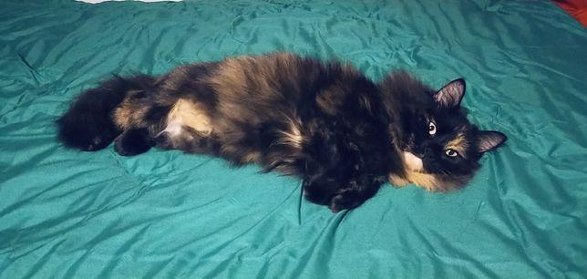 Кошка Моника ищет дом! Стерелизована