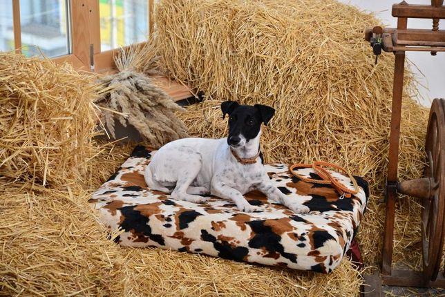 Лежанка для собаки, место, домик, коврик, матрас,
