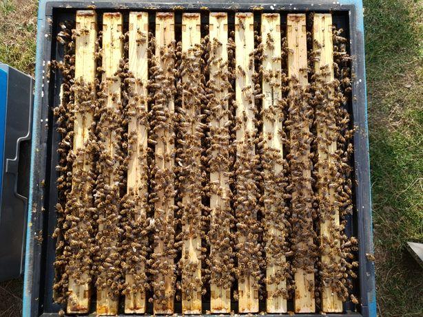 Odklady pszczele na 2021 rok