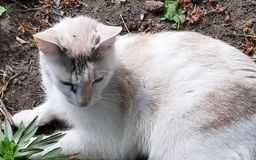 zaginęła koteczka