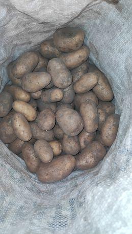 Продам вкусную домашнюю картошку