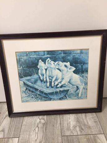 Obraz prosiaczki w drewnianej ramie 50 na 42,5 cm /8.8