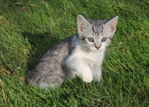Кошеня сіре. Хлопчик. котенок.
