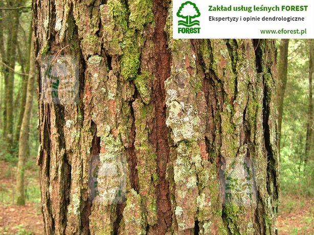 Inwentaryzacja zieleni i drzew, ekspertyzy i opinie dendrologiczne