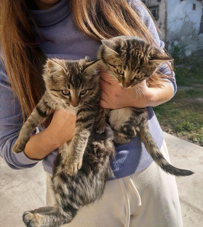 ЛУЧШИЙ ДРУГ на долгие годы - котенок, котята