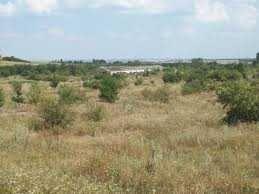 Продам господарство під фермерський бізнес  або виробництво