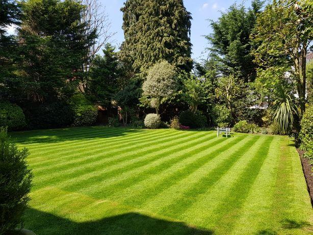 Piękny trawnik, koszenie, przycinanie żywopłotów, prace ogrodowe