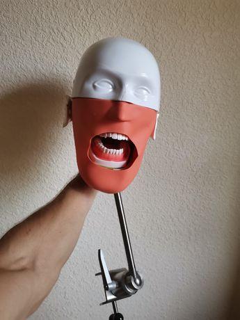 Фантом стоматологический