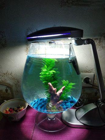Аквариум бокал круглый, ваза, флорариум