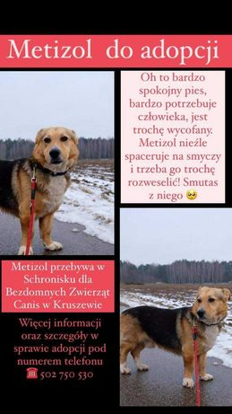 Metizol szuka domu